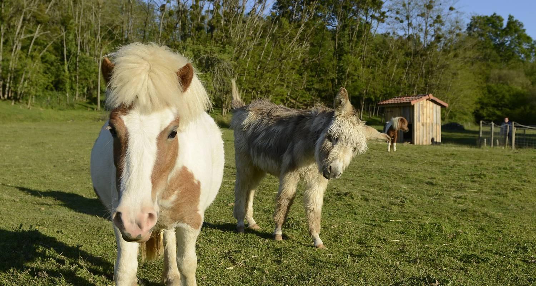 Chevaux et ânes gite équestre Alienor à la ferme
