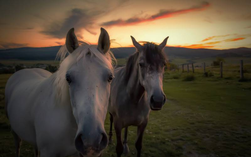 Horses in pasture for holidays