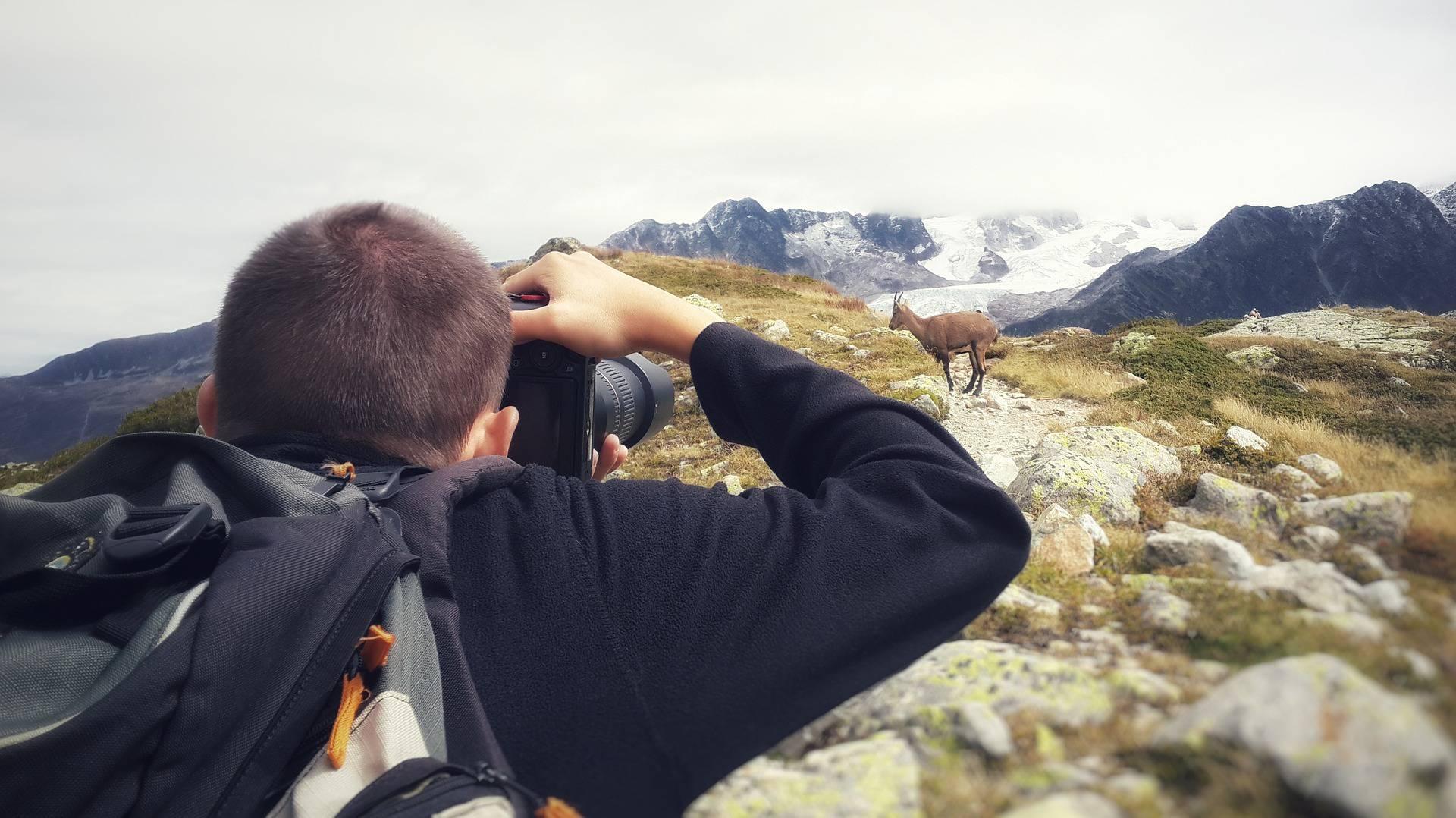 Homme photographiant un chamois