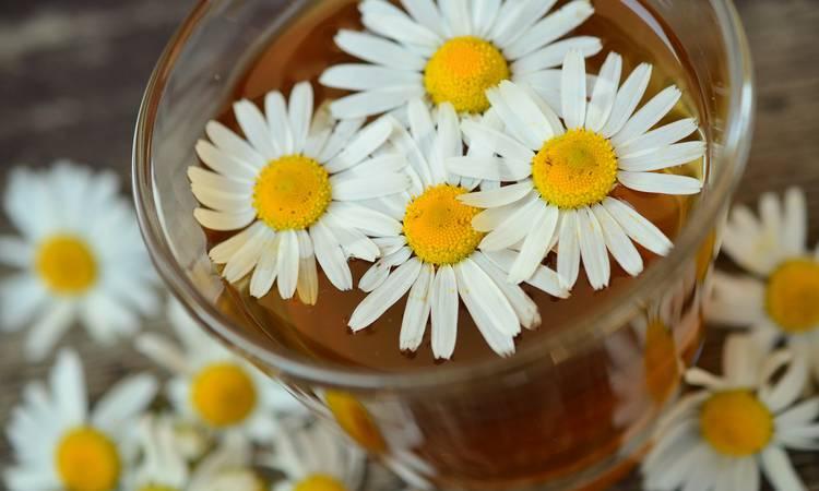 Découvrir Séjours phytothérapie et aromathérapie : de la plante au produit