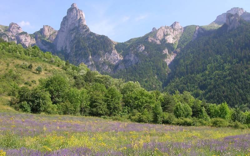 Lieux de stage phytothérapie aromathérapie