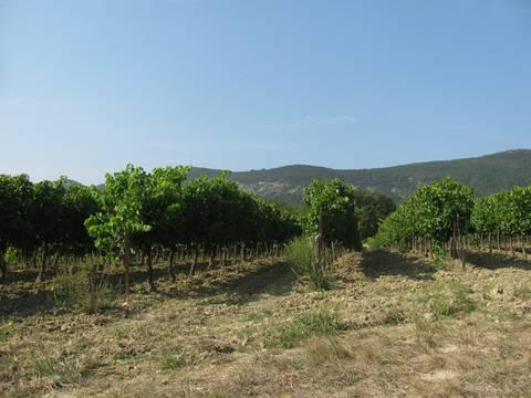Visite viticulteur grignan les adhémar séjour spiruline et vin bio