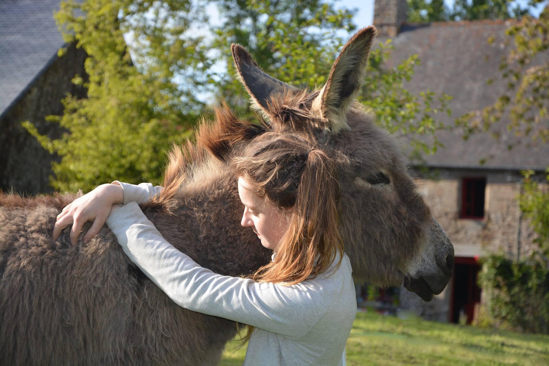 câlin avec un âne