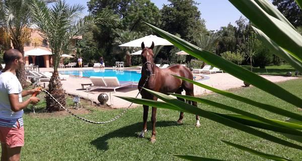 séjour Equestre Marrakech