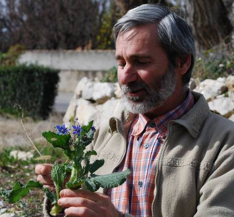 Jean Coudour formateur en phyto-aromathérapie fleur de bourrache