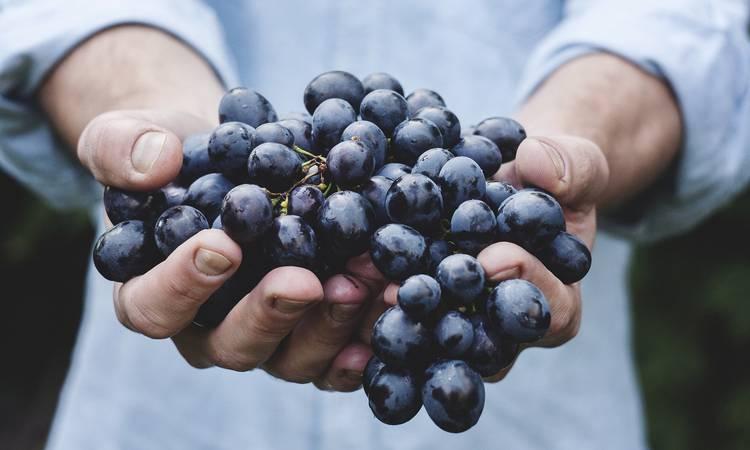 Découvrir Oenotourisme : un weekend autour du vin
