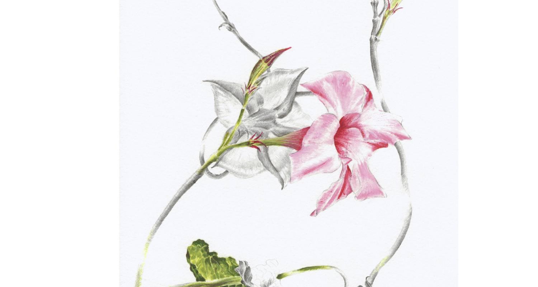 Illustration d'une fleur