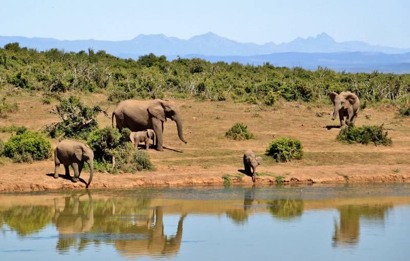 Séjour safari animalier