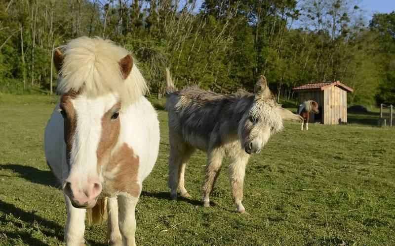 Pony and donkey equestrian lodge