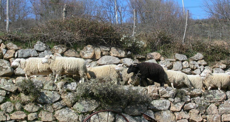 Habitación de huéspedes: ferme de leyrisse en champis (112259)