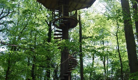 Cabane à escalier de la Canopée picture