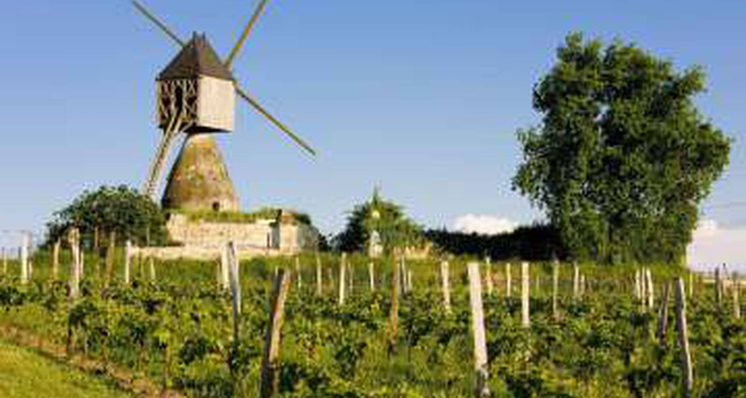 Activity: wine discovery tour in cizay-la-madeleine (123559)