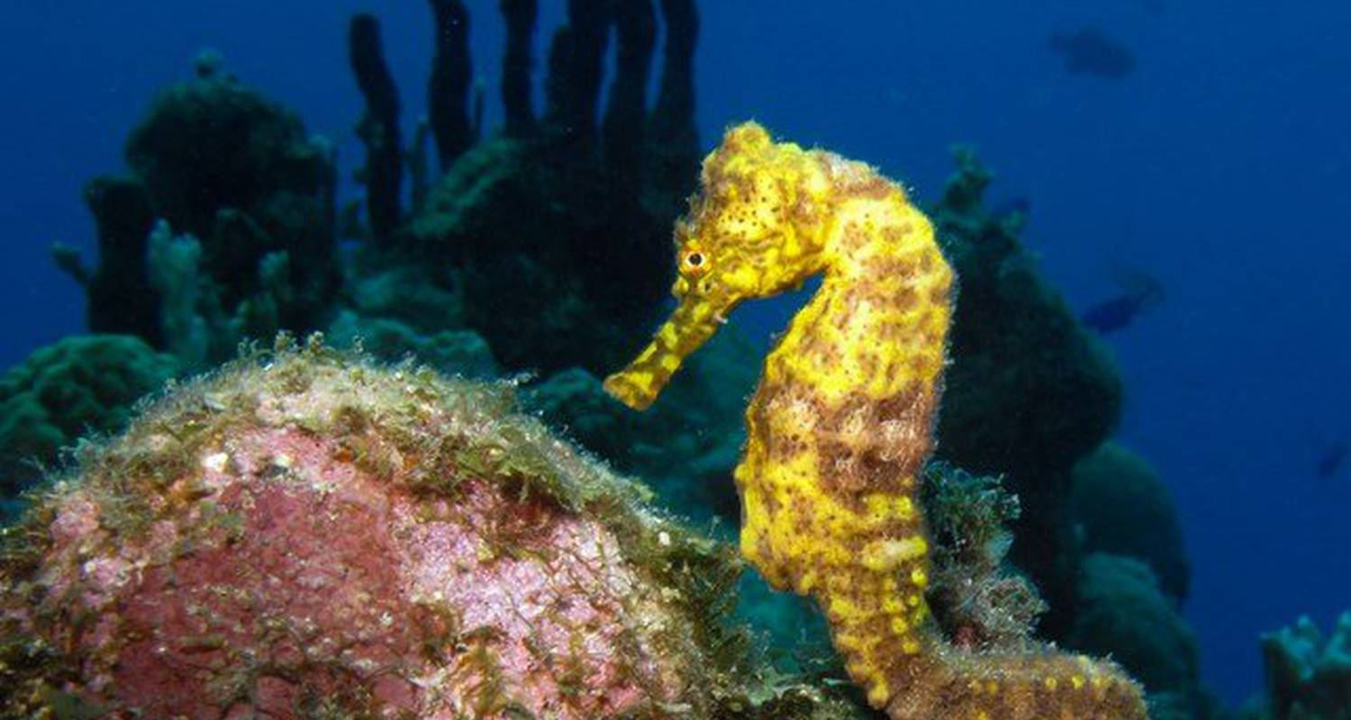 Activity: scuba diving in the cousteau marine park in guadeloupe in bouillante (123596)