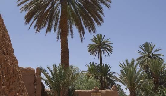 La maison saharaouie picture