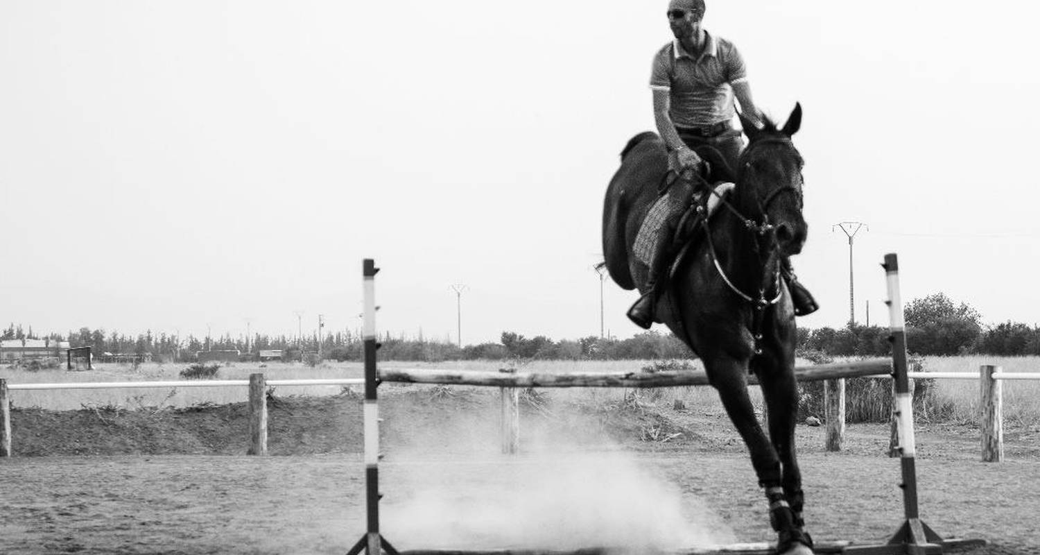 Activity: horse riding: rides and teaching in marrakesh (124333)