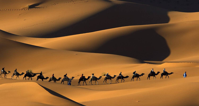 Activité: tours et trekks à ouarzazat (124447)