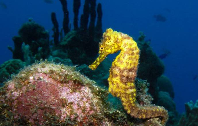 Scuba diving in the Cousteau Marine Park in Guadeloupe