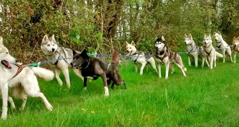 Activité: cani kart avec une meute de husky de sibérie à jaulnay (125366)