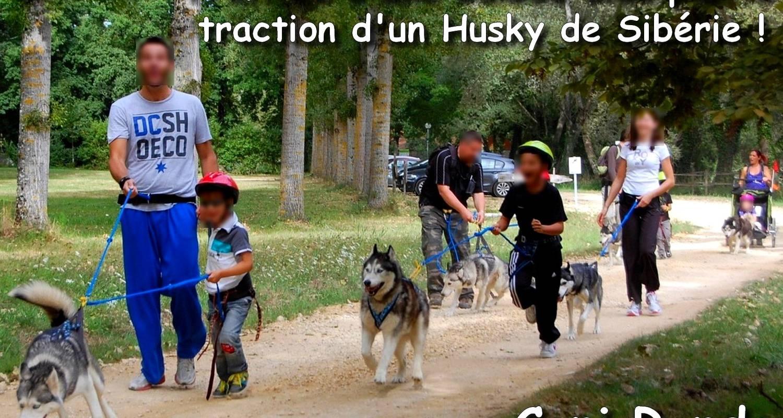 Activité: balade récréative en cani rando avec un husky de sibérie à jaulnay (125368)