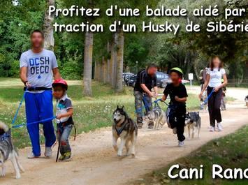Balade récréative en cani rando avec un Husky de Sibérie