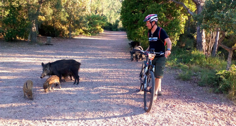 Activity: e-bike-evasion in saint-raphaël (125430)