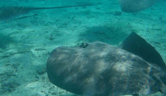 Tour du lagon, snorkeling, picnic