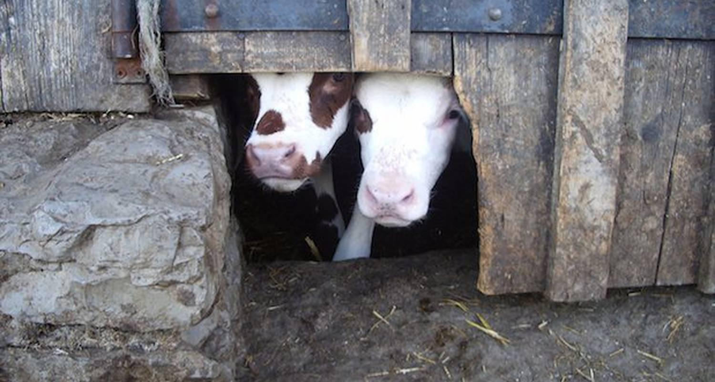 Activité: mini-ferme à mont-saxonnex (125857)