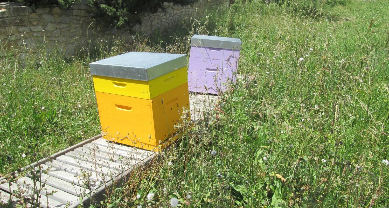 Activité: apiculture à fontvieille (125987)