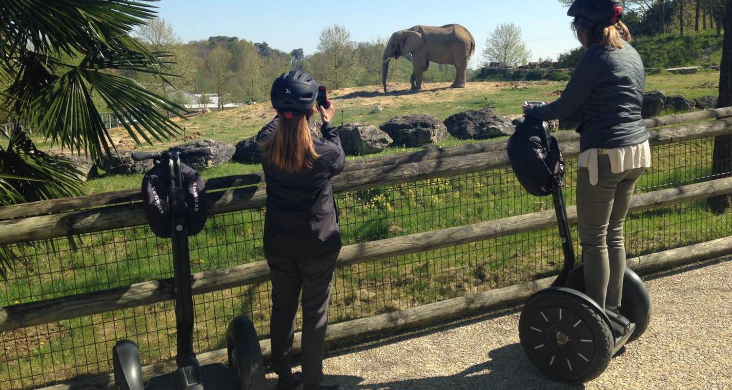 Activity: visite du zoo de beauval en segway in saint-aignan (126230)