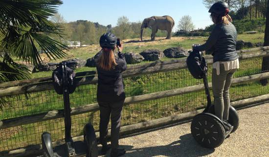 Visite du zoo de Beauval en Segway