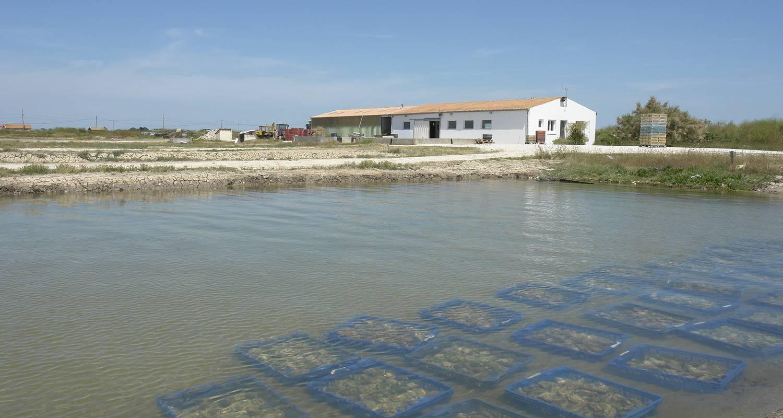 Activité: visite cabane ostréicole  à dolus-d'oléron (126338)