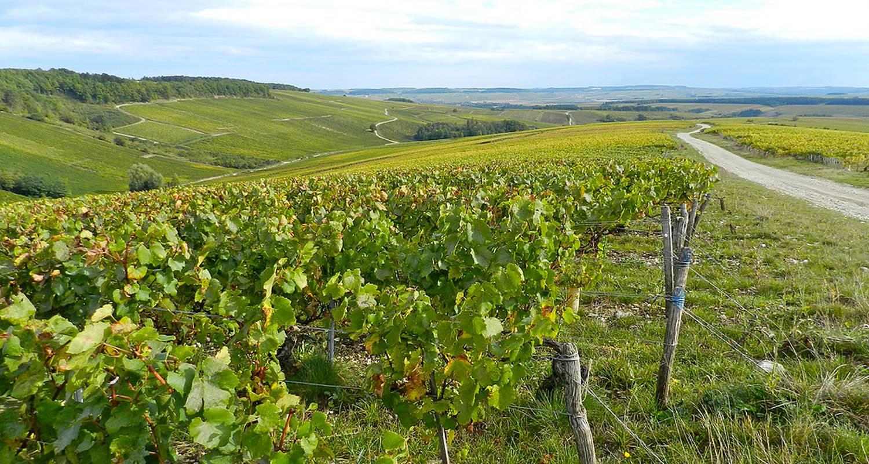 Activity: dégustation et visite au vignoble angst in pontigny (126364)