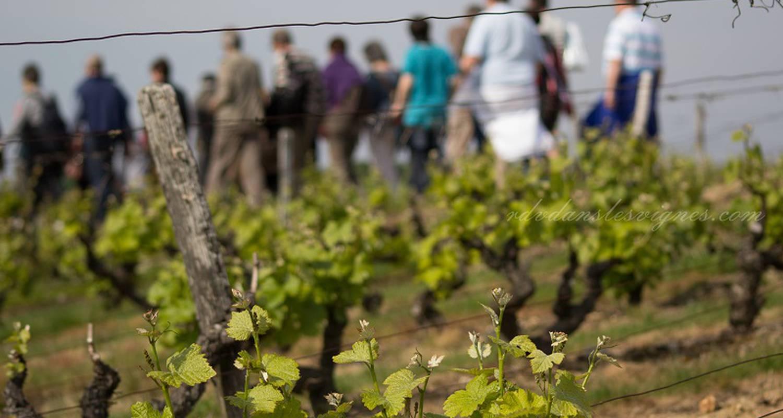 Activité: rendez-vous dans les vignes à chançay (126532)