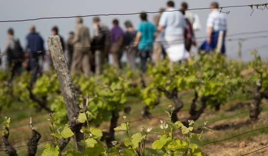 Rendez-Vous dans les Vignes