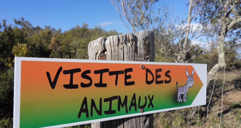 Activité: la ferme aux ânes en tordères (126558)