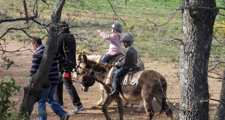 Activité: la ferme aux ânes en tordères (126556)