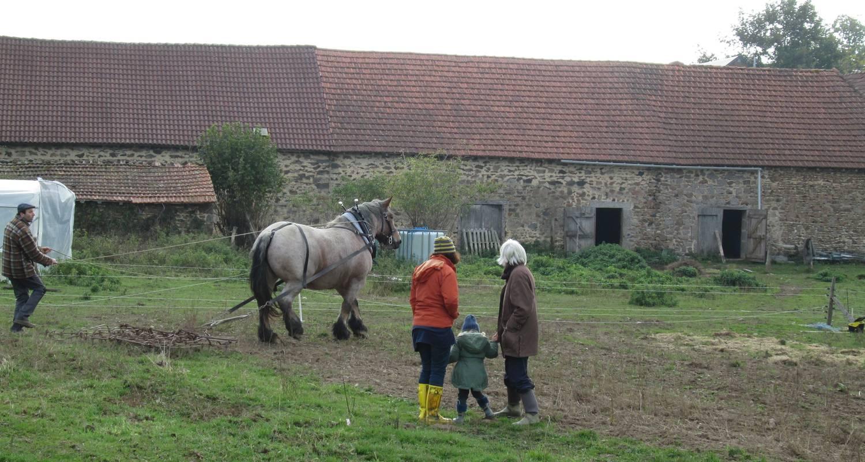 Activité: découvrez le cheval au travail à le mayet-de-montagne (126603)