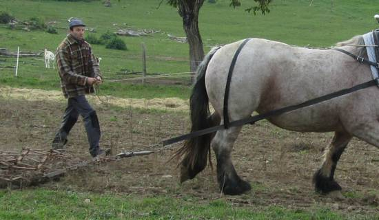 Découvrez le cheval au travail