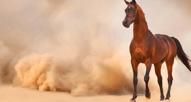 Activité: randonnées à cheval erfoud à ouarzazate (127029)