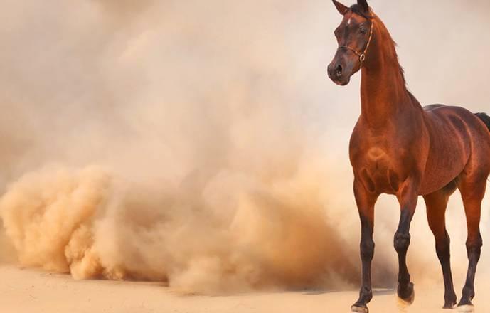 Randonnées à cheval Erfoud