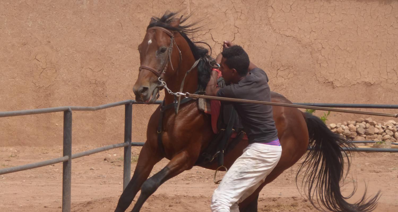 Activité: cours d'équitation et de voltige à ouarzazate (127097)