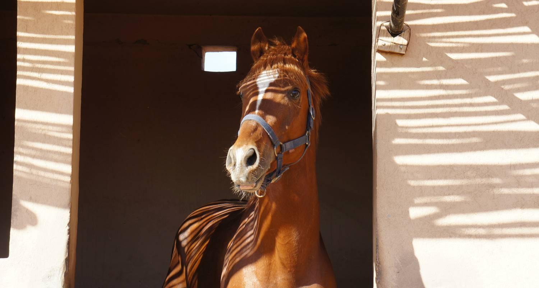 Activité: equitation à mirleft (127042)