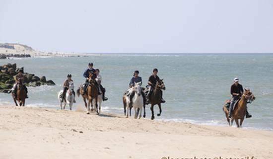 Promenade et randonnée à cheval en Medoc, et dégustation de vins