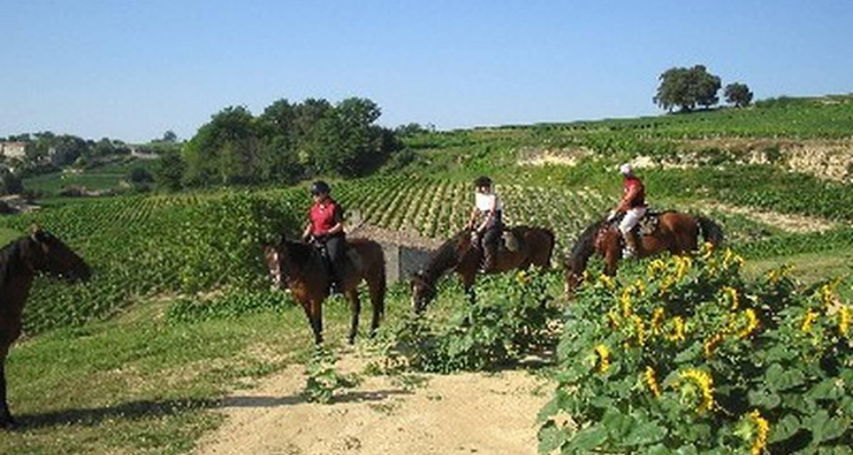 Activité: promenade et randonnée à cheval en medoc, et dégustation de vins à saint-vivien-de-médoc (127099)