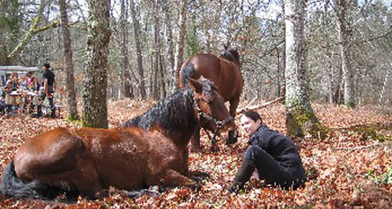 Activité: promenade et randonnée à cheval en medoc, et dégustation de vins à saint-vivien-de-médoc (127100)