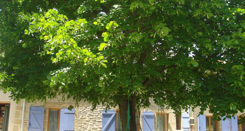 Gîte: gîte les tilleuls  à saint-martin-d'août (127580)