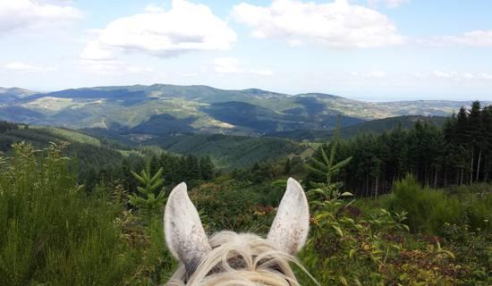 Cheval d'Azergues  Balades et randonnées à cheval