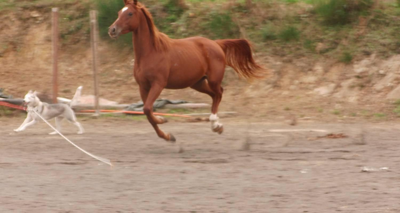 Activité: randonnées à cheval à langeac (128189)