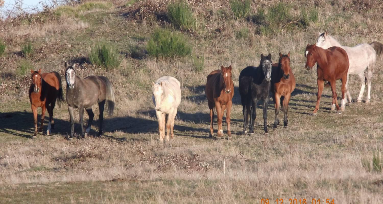 Activité: randonnées à cheval à langeac (128188)