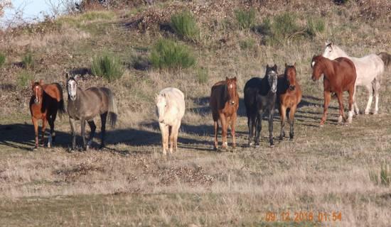 randonnées à cheval